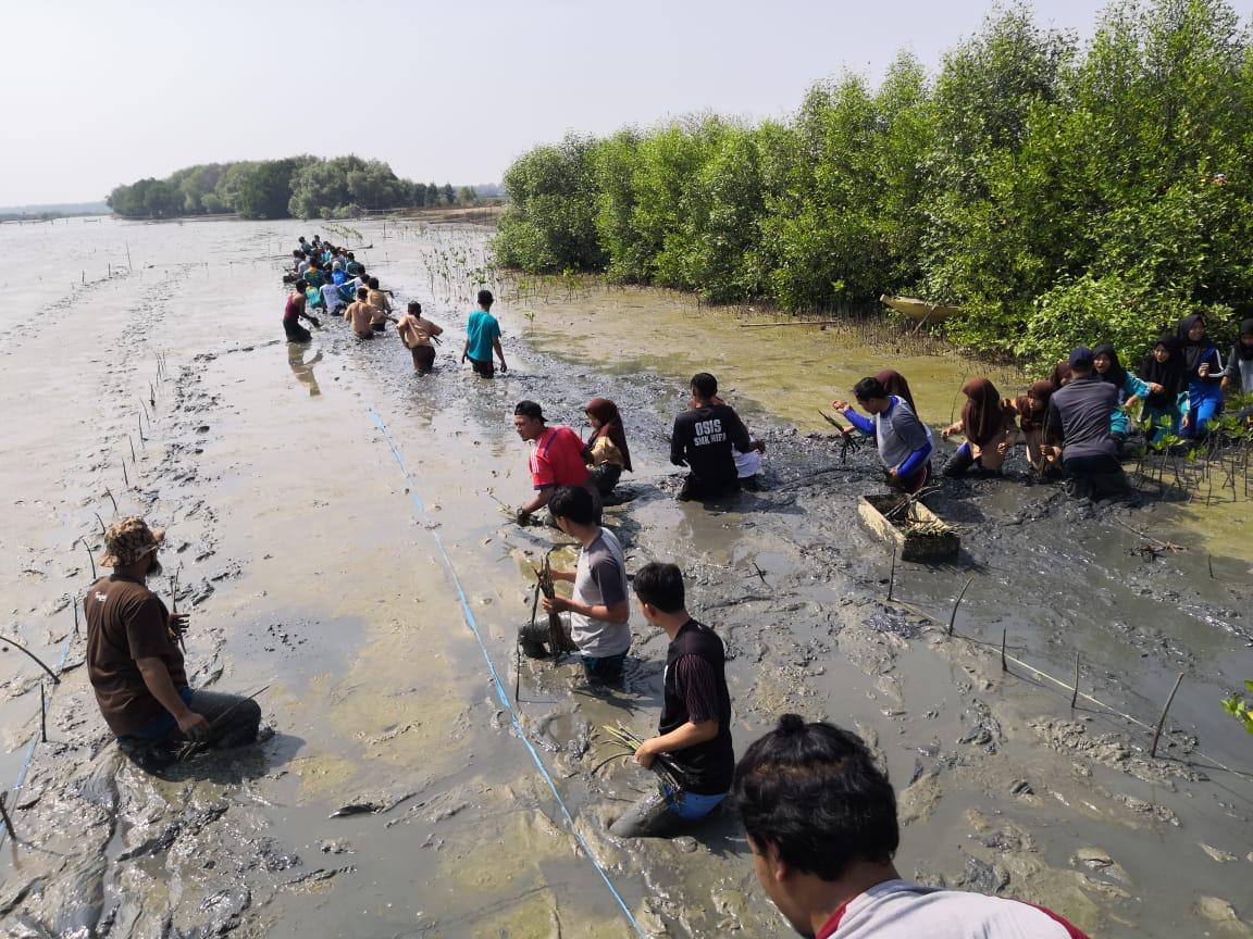 Mahasiswa bersama penggiat saat melakukan penanaman pohon mangrove empat tahun lalu di Pantai Wisata Pulau Putri
